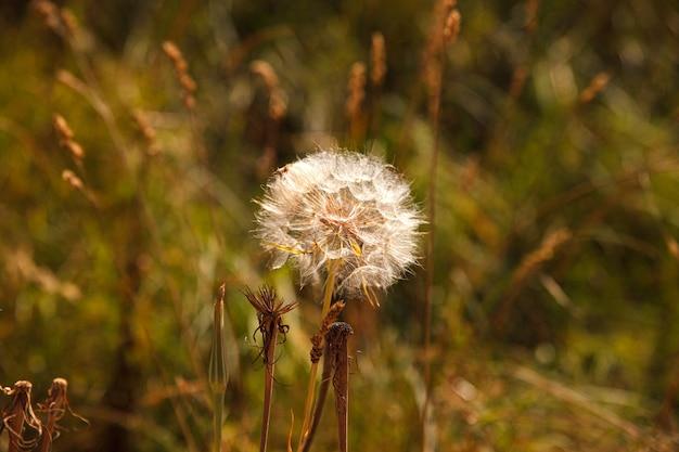 秋の色の花粉の花のクローズアップ