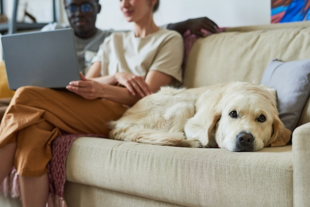 部屋の背景に座っている所有者とソファに横たわっている純血種の犬のクローズアップ