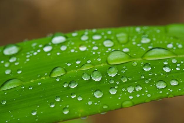 新緑の葉に残る雨滴のクローズアップ。
