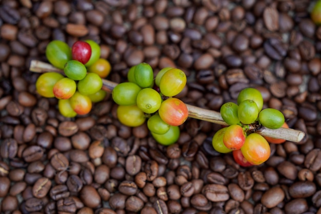 Крупный план сырых кофейных зерен с жареными кофейными зернами на заднем плане.