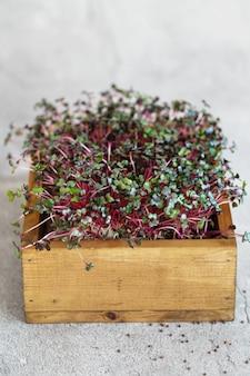 나무 상자에 붉은 양배추 microgreens의 클로즈업