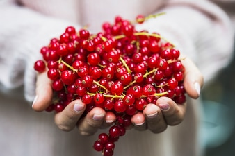 Close-up of red currant berries in hand