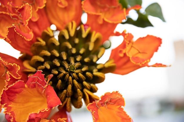 赤いエキゾチックな花のクローズアップ。エジプトの植物と花。