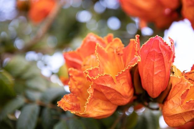Крупный план красных экзотических цветов. растения и цветы египта.