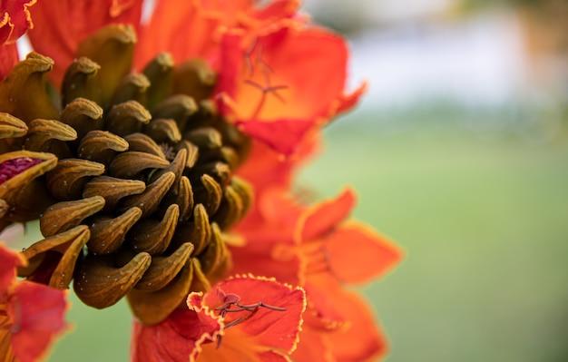 Крупный план красных экзотических цветов