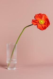 Крупным планом красный цветок мака в вазе