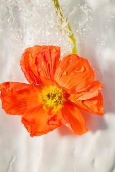 水滴と赤いポピーの花のクローズアップ