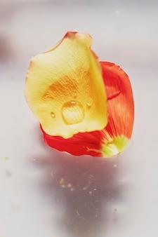水滴と赤いポピーの花びらのクローズアップ