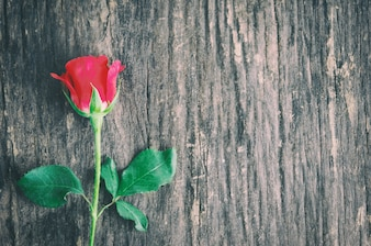 Close up of red rose flower on wooden background with vintage tone, Valentine's rose