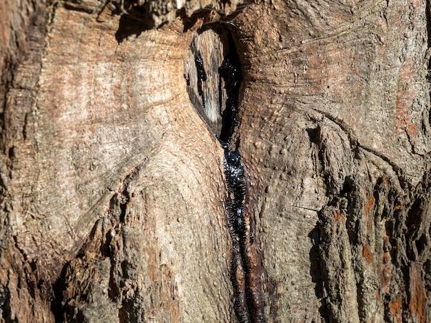 木の割れ目から流れる樹脂のクローズアップ