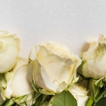 흰색 배경에 장미의 클로즈업