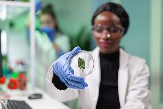 Крупный план ученого, смотрящего на чашку петри с зеленым листом, изучающего растения