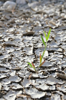 Крупный план маленького ростка, растущего на потрескавшейся и высохшей земле