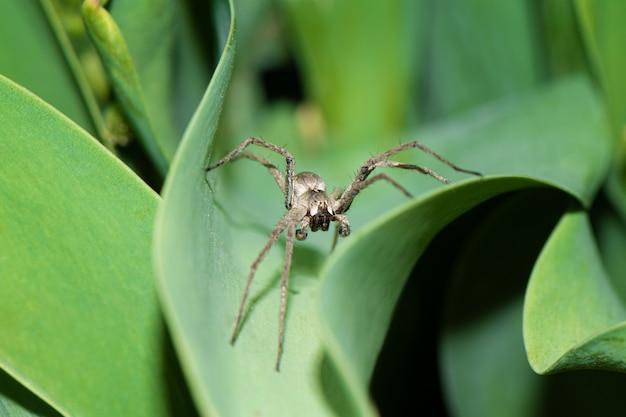 庭のクモのクローズアップ