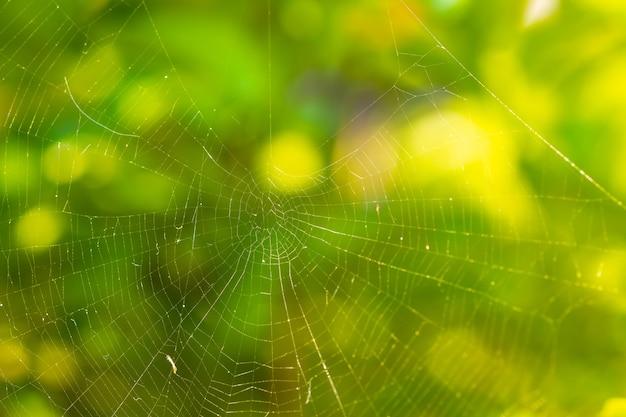 자연 배경에 아름 다운 패턴으로 거미줄 (거미줄)의 클로즈업.
