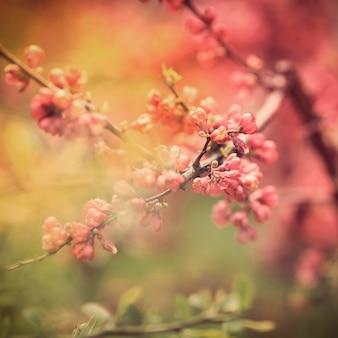 木の上の春の花のクローズアップ