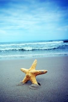 Крупным планом с морскими звездами фоне моря