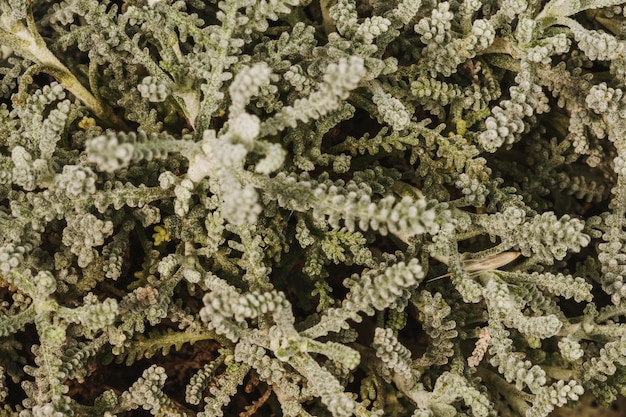 見事な植物の葉のクローズアップ