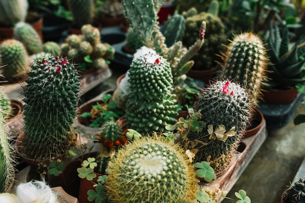 온실에서 자라는 즙이 많은 식물의 근접 촬영
