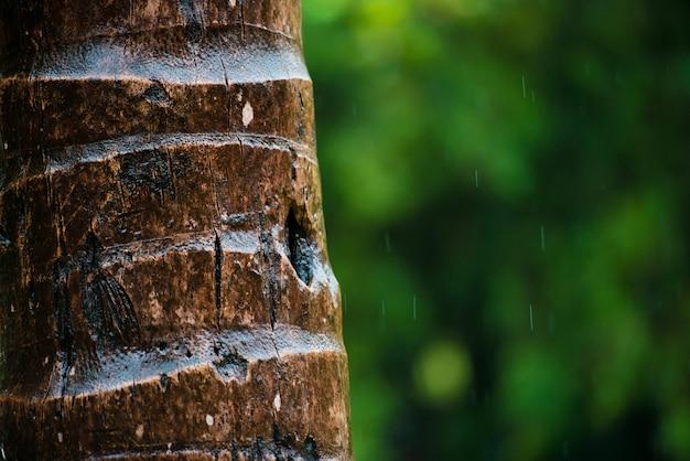 Закройте вверх коры пальмы, узор текстуры фона. под дождем.