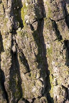 숲에서 자라는 나무 껍질의 클로즈업. 작은 피사계 심도