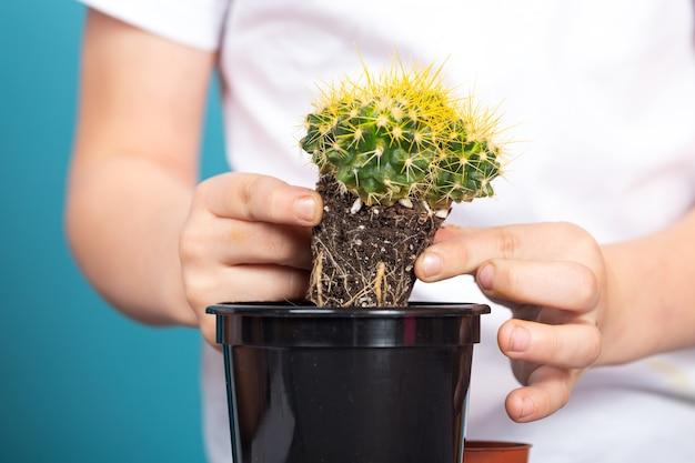 男の子のクローズアップは、テーブルの上でより速く成長できるように、わずかに成長したサボテンを黒い鍋に植えます