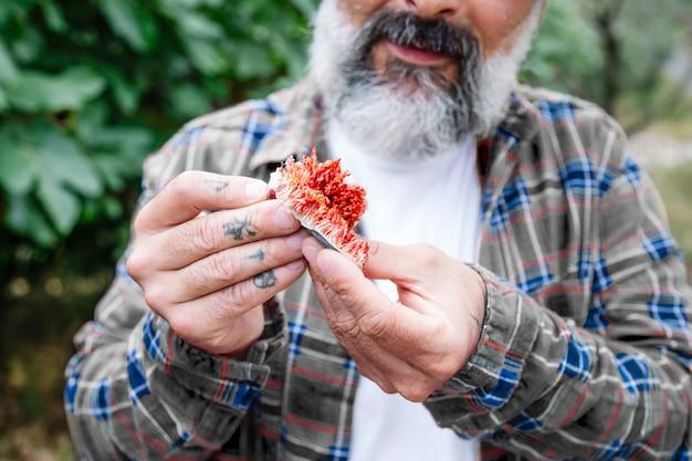 익은 과일의 품질, 색상 및 품질을 확인하는 농부의 클로즈업. 무화과