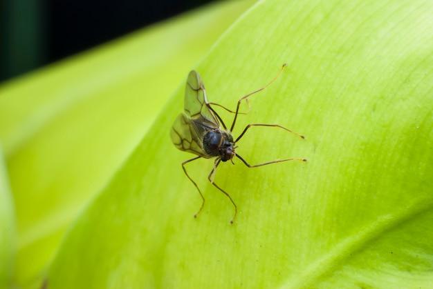 緑の葉の昆虫のクローズアップ。