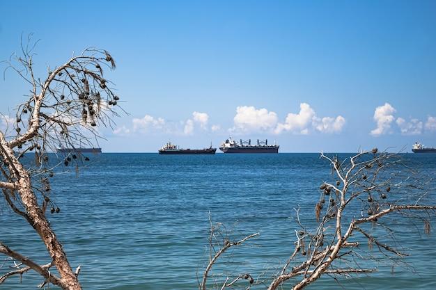 夏の風景のクローズアップ。青い海、地平線上の雲、貨物船は、松の木の乾いた枝を通して眺めます。