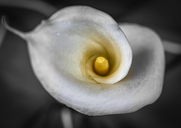 花の質感と色のクローズアップ