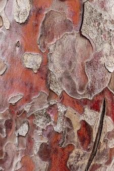 가문비나무 껍질의 질감을 닫습니다.