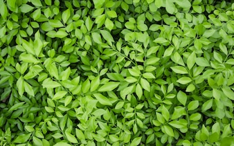 Close up of top view natural green leaves in public park for background wallpaper