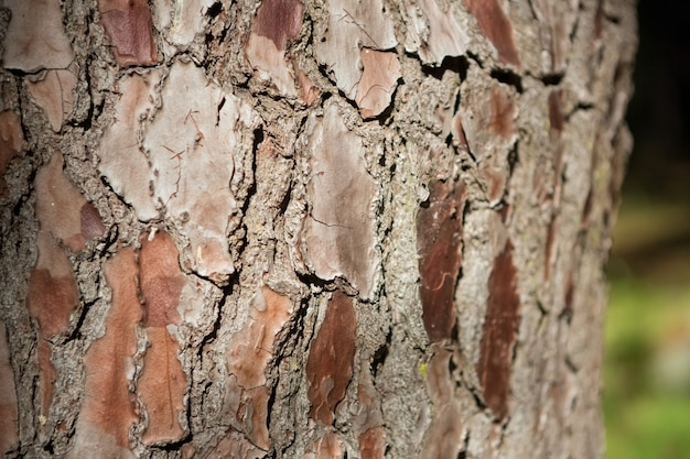 Крупный план коры дерева