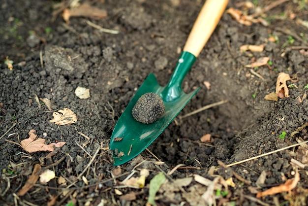 Крупным планом трюфельный гриб и лопата в лесу