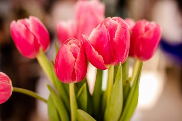 チューリップの花のクローズアップ