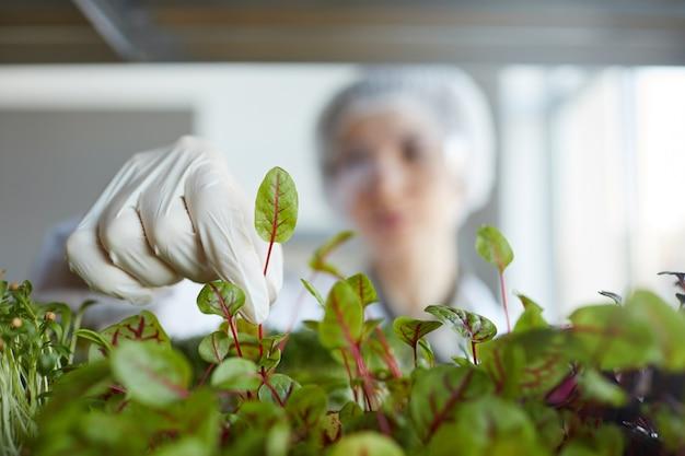 バイオテクノロジーラボで作業中に植物サンプルを調べている認識できない女性科学者のクローズアップ、コピースペース