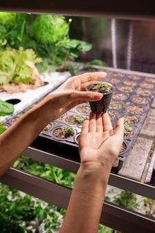 온실에서 새싹과 함께 작은 냄비를 들고 인식 할 수없는 여자의 근접, 그녀는 식물의 성장을 제어
