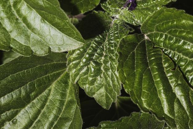 植生の葉のクローズアップ