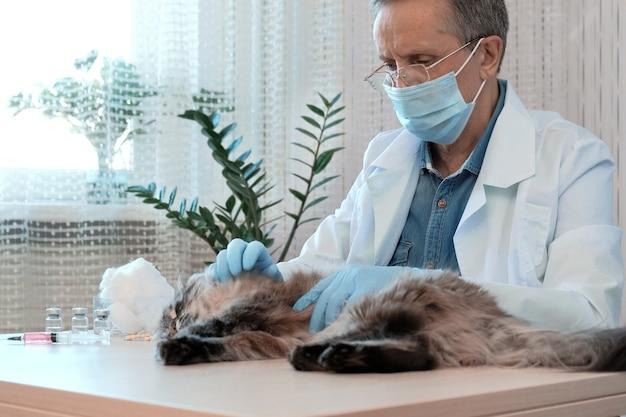 Крупным планом ветеринарный врач в медицинских перчатках исследует здоровье кошки в клинике. человек гладит домашнее животное и успокаивается на столе ветеринарного осмотра. концепция ухода за домашними животными, ветеринарными, здоровыми животными.