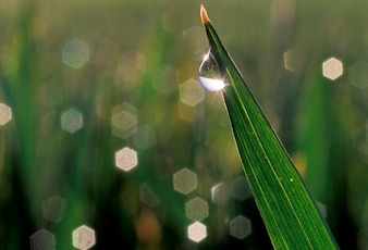 Close up of water droplet on blade of grass