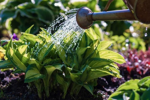 정원에서 식물 위에 물을 수 닫습니다