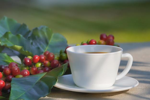 Крупный план белой кофейной чашки с конкретным фоном и сырых кофейных зерен на утреннем солнце.