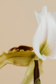 흰색 cymbidium 난초의 클로즈업