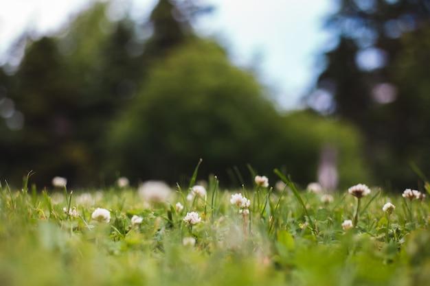 白い花のクローズアップ