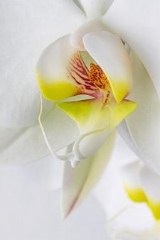백색 난초 꽃의 근접 촬영