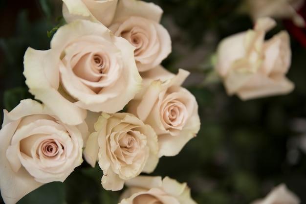 흰 장미 꽃의 근접 촬영