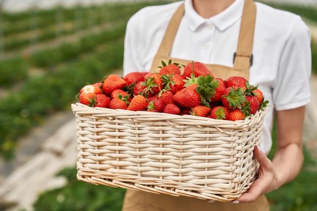 若い女性を手に持っている新鮮な熟したイチゴでいっぱいの籐のバスケットのクローズアップ。温室で季節の果物を栽培しているエプロンの女性の庭師。