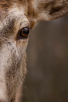 森の中の野生の鹿のクローズアップ