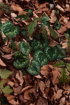 야생 숲 잎의 클로즈업