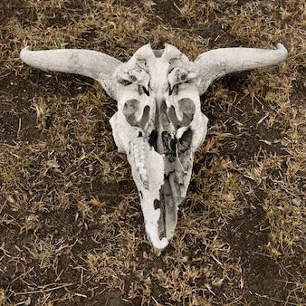 地面、タンザニア、アフリカのヌーの頭蓋骨のクローズアップ